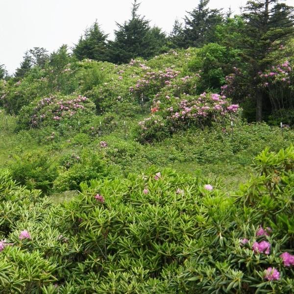 Roan Mountain State Park: Gary McCullough
